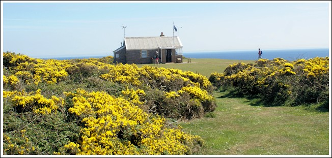 Lookout with gorse bushes in the foreground